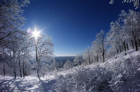 download wallpaper winter wald schnee sonne free