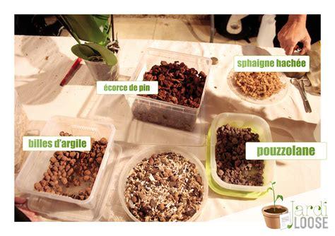 Comment Rempoter Une Orchidée by Ficus Ginseng Rempotage Simple Il A Une Bonne Structure