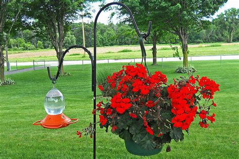 hummingbird feeder placement where to put feeders