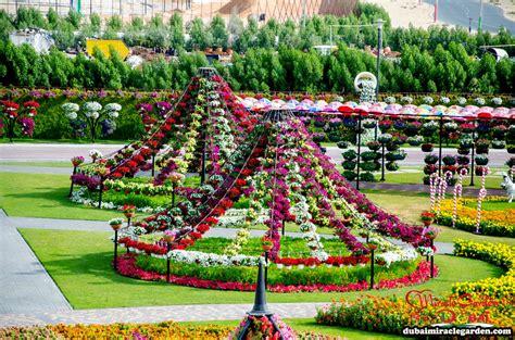 Dubai Miracle Garden The World S Biggest Natural Flower Dubai Flower Garden