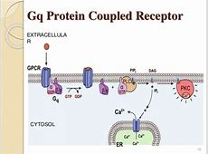 G- Protein Coupled Receptors G Protein Coupled Receptors Diagram