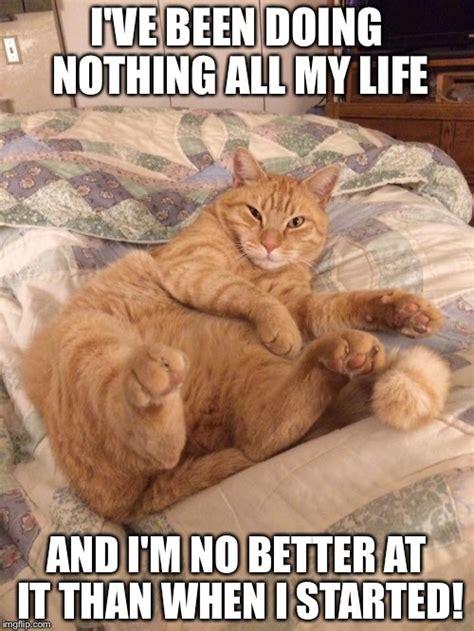Lazy Cat Meme - lazy cat imgflip
