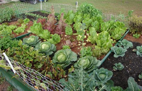 fall vegetable garden florida the garden for eatin for practical vegetable gardening