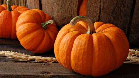 pumpkin wallpaper 1920x1080 33969
