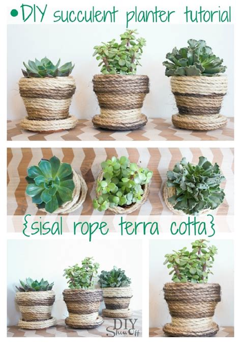 diy succulent projects top 10 diy projects with succulent plants