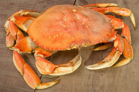 To Market Crab Tools by Dungeness Crab On Table Food Drink Photos On Creative