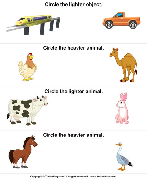 when does zoo lights start heavier and lighter animals worksheet turtle diary