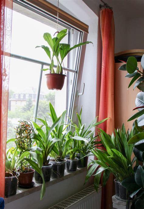 orchideen im schlafzimmer meine orchideenfenster juni 2015 187 majas pflanzenblog
