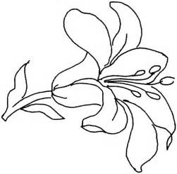 coloring pages of lily flowers images