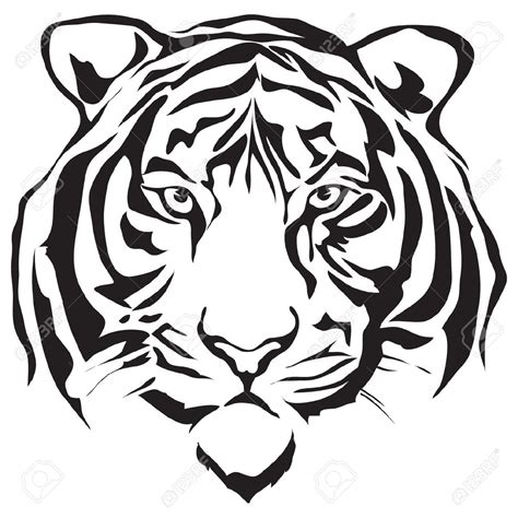 tiger head stock photos images royalty free tiger head