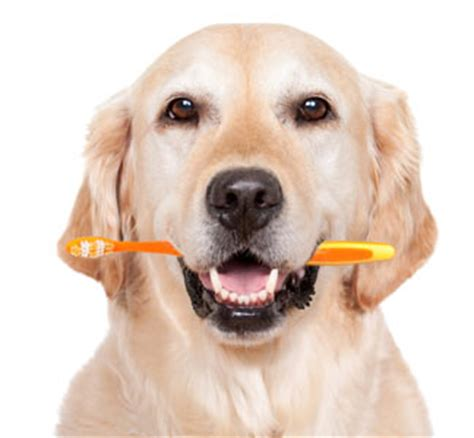 dental care for dogs home dental care for dogs