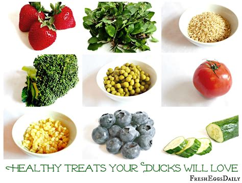 what to feed a healthy treats for backyard ducks fresh eggs daily 174