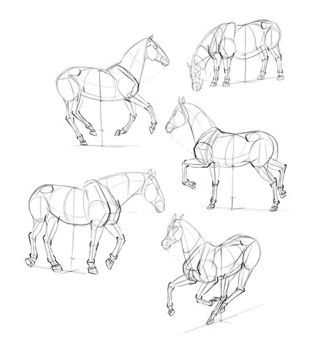 how to draw step by step how to draw horses step by step