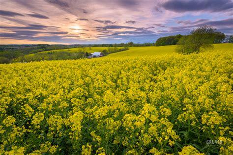 lehigh valley landscape fields of gold lehigh valley landscape photographer