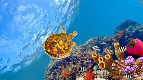 aquatic hd wallpapers  beautiful places   world