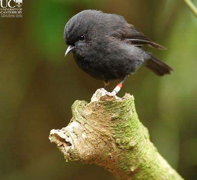 1000 ideas about robins on pinterest robin bird birds