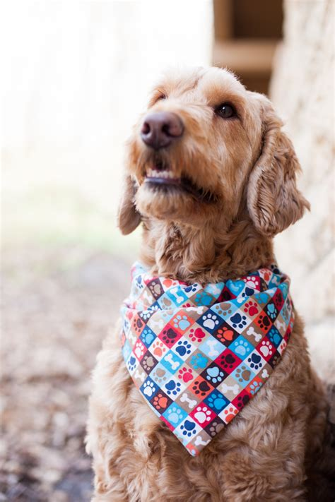 goldendoodle puppy mill rescue why you need to fight to end puppy mills rip harley