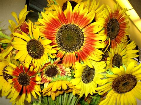 Flower Arranging File Red Sunflowers Jpg Wikimedia Commons
