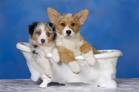 2 dogs in a bathtub how to give the perfect dog bath pictures of dogs and all