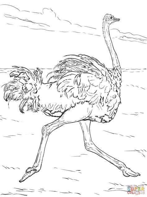 ostrich runs coloring page free printable coloring pages
