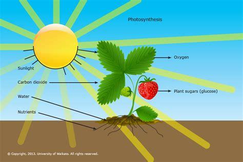 what of light do plants need fertiliser science learning hub