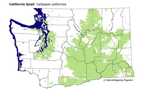 california quail map california quail distribution map