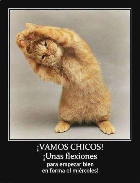 imagenes chuscas yoga descubre lo mejor en gifs shocked gifs gatos memes