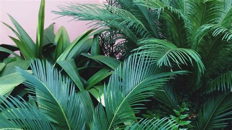 aesthetic plant wallpaper green aesthetic tumblr google search green beauty