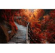 Nature Landscape River Forest Fall Walkway Path
