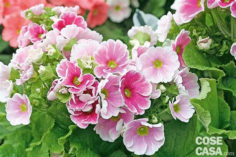 piante fiorite da giardino le piante fiorite pi 249 da acquistare adesso cose di