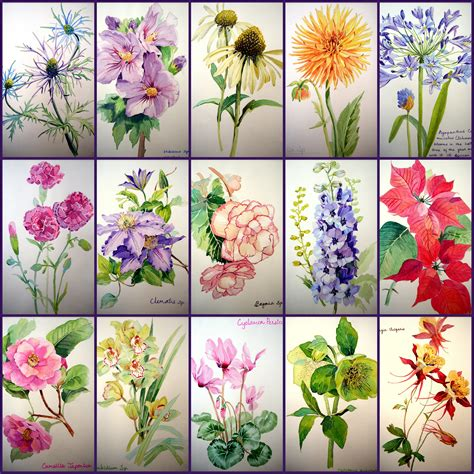 a z of flower portraits the watercolor flower painter s a to z by adelene fletcher