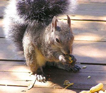 all about squirrels website picking a squirrel feeder