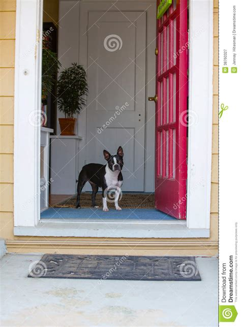 Dog Looking Out The Front Door Royalty Free Stock Out The Front Door