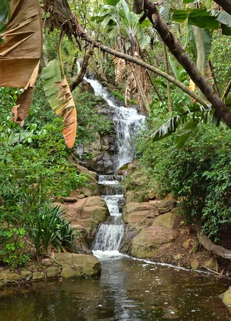 Botanical Gardens Pretoria Pretoria National Botanical Garden What S On In Joburg