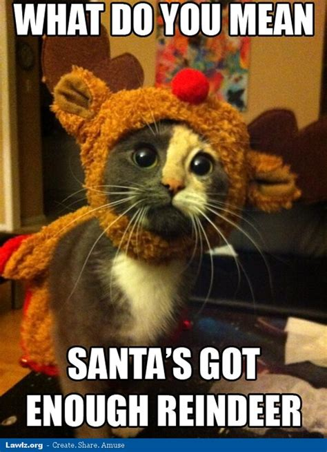 Merry Christmas Cat Meme - redux it s not friday let s be super cute