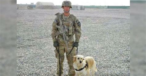 most expensive golden retriever army staff sergeant reunites with bomb sniffing golden retriever