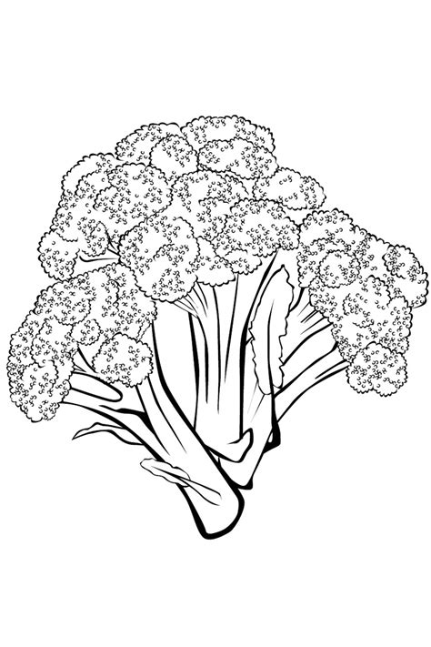 broccoli coloring pages    print
