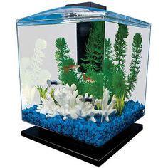 Small Aquarium Pets At Home 1000 Images About Small Fish Tanks On Aqua