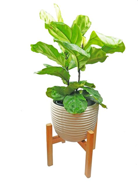 large mid century modern plant stand wooden plant stand