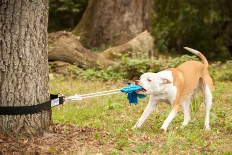 backyard toys for dogs super tug strong dog toy safe alternative to spring pole