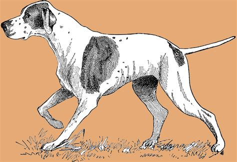 dog illustration pictures  pin  pinterest pinsdaddy