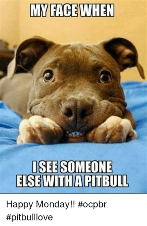 Pitbull Memes - my face when isee someone else witha pitbull happy monday