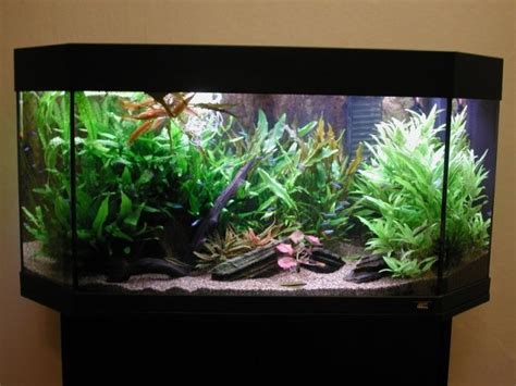 design aquascape murah contoh membuat dekorasi akuarium dengan biaya murah