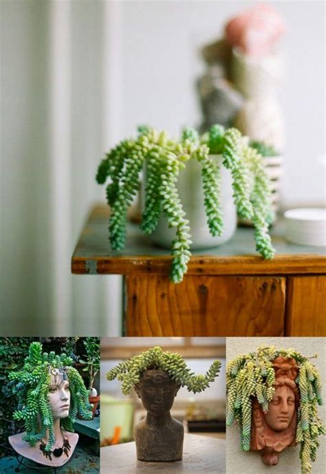 indoor house plants for sale best 25 house plants for sale ideas on pinterest