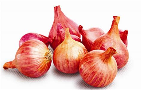 Jual Bibit Bawang Merah Tuk Tuk jombang cara menanam bawang tuk tuk