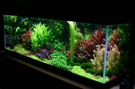 aquascape plant 35 best images about aquariums on pinterest plants 50