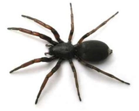 Can A Garden Spider Kill You Thanks To La It S Cool To Be A Spider