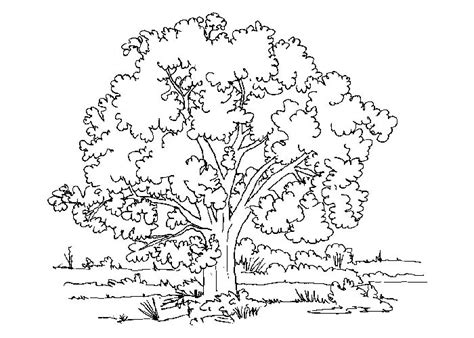realistic tree coloring page free coloring pages of realistic trees colour