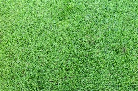 Karpet Jepang mengenal jenis rumput untuk taman rumah rumah dan gaya