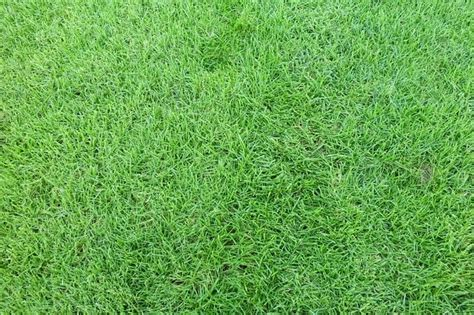 Bibit Rumput Golf Mengenal Jenis Rumput Untuk Taman Rumah Rumah Dan Gaya